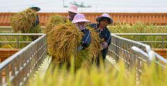 china_farmers_no_gmo